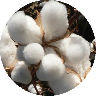 fertilizante algodon