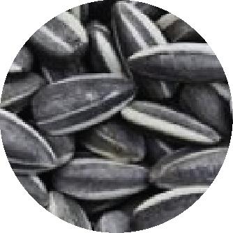 fertilizante girasol