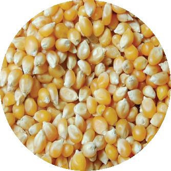 fertilizante maiz