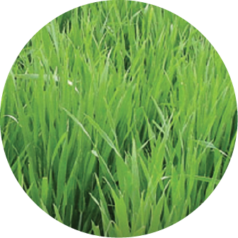 fertilizante pastura