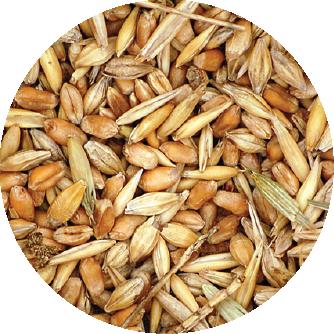fertilizante trigo
