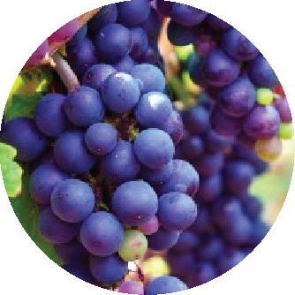 fertilizante uva