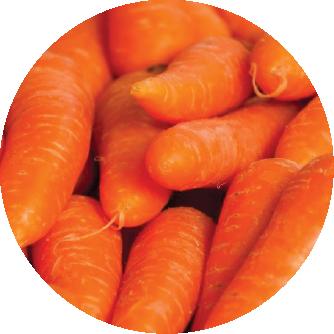 fertilizante zanahoria